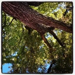 Mon ami l'arbre