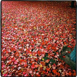 Le bal des feuilles mortes