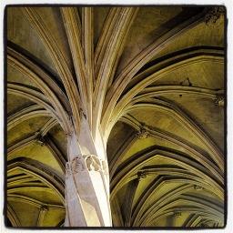 Les fleurs des cathédrales