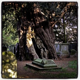 La mémoire de l'arbre