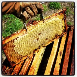Le monde des abeilles P2