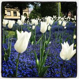la spéculation de la tulipe