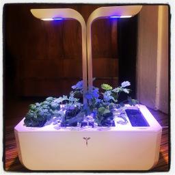 Des plantes et des robots